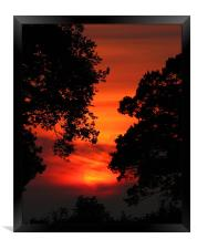 Sunset Between The trees, Framed Print