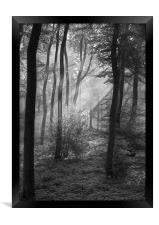 The Tones of the Forest, Framed Print