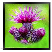 Flower of Scotland, Framed Print