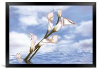 Callas In Water, Framed Print