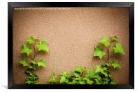 leaves of hedera helix ivy and wall , Framed Print