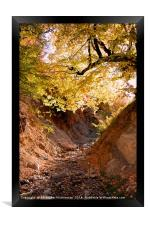 Nice colors in jungle,, Framed Print