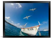 Swimming with fish and turtles Curacao views , Framed Print