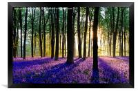 Bluebell Dawn - 5, Framed Print