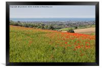 Poppies and the Sea, Framed Print