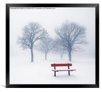 Winter trees and bench in fog, Framed Print