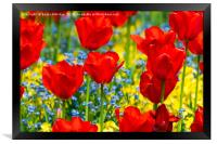 Beautiful red tulips, Framed Print
