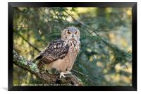 A Bengal Owl sitting in a tree., Framed Print