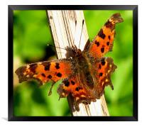 Comma, Framed Print