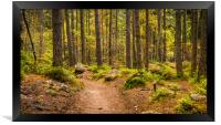 Forest Path in autumn , Framed Print