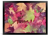 Autumn rustic colorful maple leaves background , Framed Print