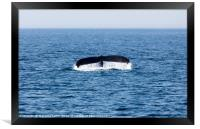 Tail of Whale, Cape Cod, Framed Print