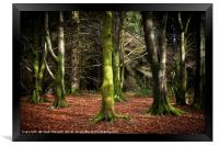Into the Woods, Framed Print