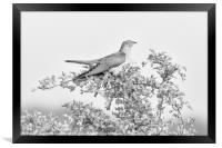 Cuckoo (The Visitor), Framed Print
