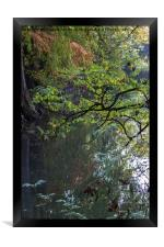 reflection on pond in autumn, Framed Print