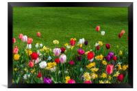 Tulips and grass, Framed Print