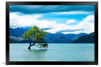 Lone Tree, Lake Wanaka, New Zealand, Framed Print
