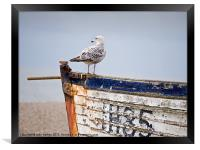 """""""Look Out""""  - Herring Gull on a derelict fishing b, Framed Print"""