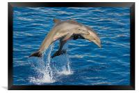 Jumping Dolphins, Framed Print
