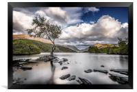 The Lone Tree - Llyn Padarn, Framed Print
