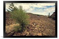 Young and small pine among stones with the train t, Framed Print