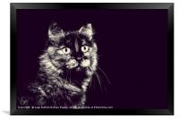 Image of very nice cat in black and white, Framed Print