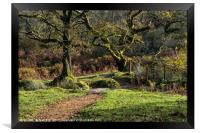 Moss covered trees on Dartmoor, Framed Print