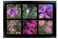 Collection of Australian wildflowers in purple, Framed Print