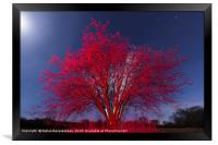 The Red tree, Framed Print