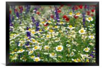 meadow with wild flowers spring season, Framed Print