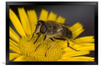 Fascination of The Macro World, Framed Print