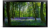 Chalet Wood Wanstead Park Bluebells, Framed Print