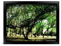 SHADE OF MOTHER NATURE , Framed Print