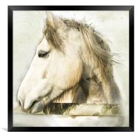 White Horse Looking Sideways, Framed Print