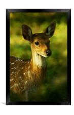 Little Bambi Deer, Framed Print