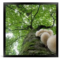 Tehidy Woods: Tree with Porcelain Cap Fungus, Framed Print