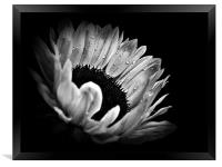 Sunflower Droplets In BW, Framed Print