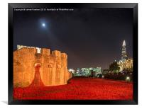 Tower of London Poppies, Framed Print