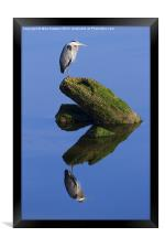 Great Blue Reflection, Framed Print
