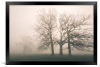 Early morning sun and trees in fog., Framed Print