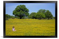 Girl in buttercup meadow, Framed Print