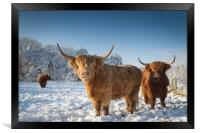 Highland cattle in the snow, Framed Print