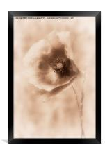 Blowing in the Wind 2, Framed Print