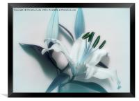 Lily Blues, Framed Print