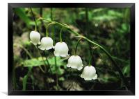 Lily Of The Valley, Framed Print