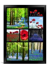 Poppies and Bluebells, Framed Print