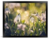 Spring is on its way, Framed Print