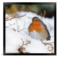 Robin in snow, Framed Print