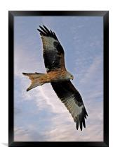 Red Kite, Framed Print