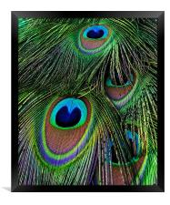 Iridescent Eyes, Framed Print